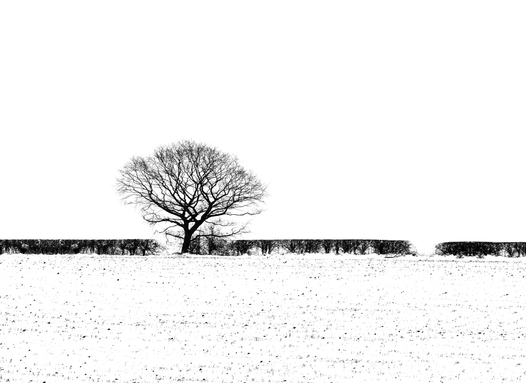 Bleak Winter