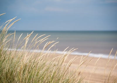 Southwold Beach Grasses